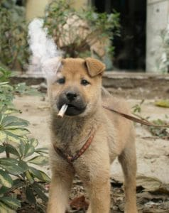 Dogs and second hand smoke.